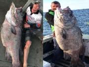 """Thế giới - Úc: Đi câu cá 3kg, bắt được """"quái vật"""" khổng lồ 70kg"""