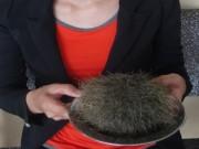 Phát hiện vật thể nghi  cát lợn  ở Bạc Liêu