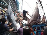 """Tin tức trong ngày - Cần thủ kể lại khoảnh khắc """"đánh vật"""" với cá ngừ vây xanh """"khủng"""""""