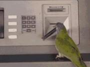 """Ảnh động: Âm mưu  """" thống trị thế giới """"  của loài chim"""
