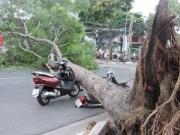 Tin tức trong ngày - Cây xanh bật gốc tại ngã tư, đè nát 2 xe máy