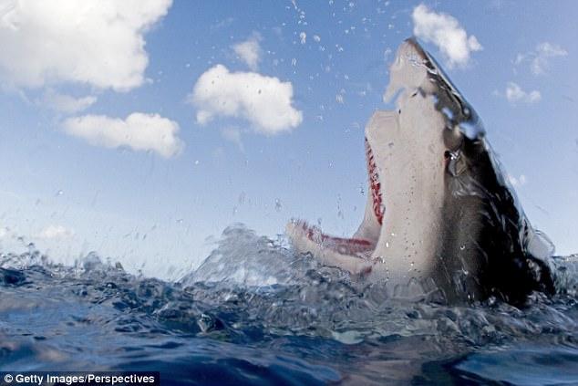 Chồng đấm vào mặt cá mập 3 lần vì tội cắn nát chân vợ - 1