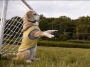 Ảnh động: Hài hước với những chú cún đam mê thể thao