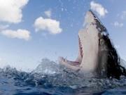 Phi thường - kỳ quặc - Chồng đấm vào mặt cá mập 3 lần vì tội cắn nát chân vợ