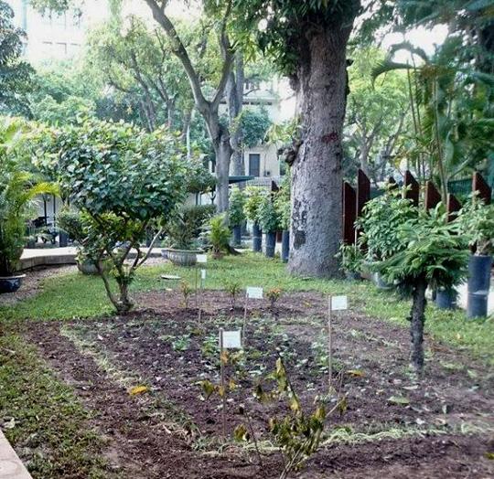 """""""Khu vườn bí mật"""" trong Đại sứ quán Pháp ở Hà Nội - 12"""