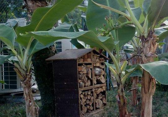 """""""Khu vườn bí mật"""" trong Đại sứ quán Pháp ở Hà Nội - 6"""