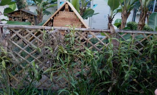 """""""Khu vườn bí mật"""" trong Đại sứ quán Pháp ở Hà Nội - 7"""