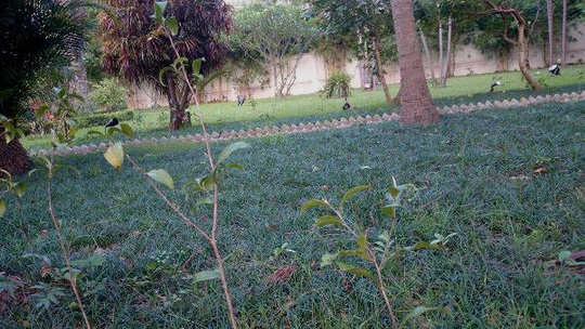 """""""Khu vườn bí mật"""" trong Đại sứ quán Pháp ở Hà Nội - 8"""