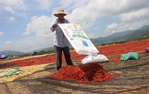 Xót xa giá ớt đang 50.000 rớt còn 3.000 đồng/kg: Lại do Trung Quốc? - 1