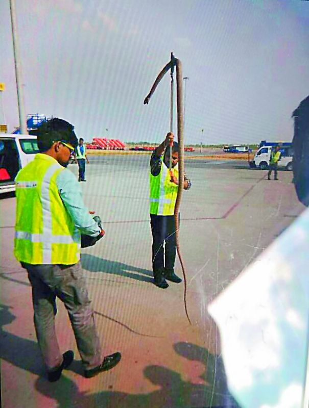 Trăn khổng lồ bò vào sân bay Ấn Độ, suýt lên máy bay - 2