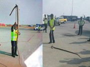 Thế giới - Trăn khổng lồ bò vào sân bay Ấn Độ, suýt lên máy bay