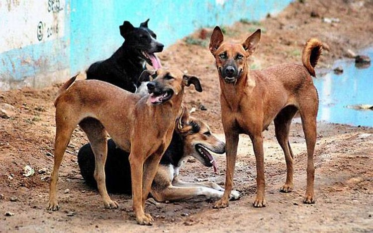 Đàn chó ăn xác chủ vì bị bỏ đói 5 tháng ở Tây Ban Nha - 1