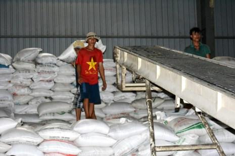 Gạo Việt có hợp đồng 'khủng' 1 triệu tấn/năm - 1