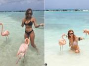 Sốt trào lưu du lịch chụp ảnh cùng chim hồng hạc
