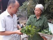 Thị trường - Tiêu dùng - Trồng cây tiền tỷ: Chỉ 1 cây rau sắng rừng thu 3 triệu đồng ngon ơ