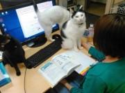 Công ty  chất nhất quả đất : Thưởng tiền cho nhân viên nuôi mèo