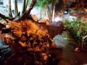 Bất ngờ khi thấy cây xanh bật gốc đè ô tô trên phố SG