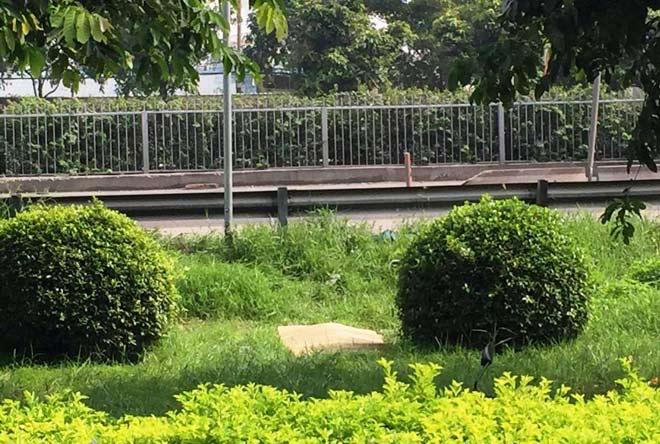 Cô gái trẻ chết bí ẩn trên bãi cỏ trong công viên