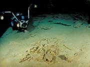 Tận thấy nghĩa địa rùa trong hang động bí ẩn dưới đáy biển