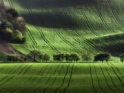 Thả hồn trên cánh đồng xanh mượt đẹp như tranh ở Czech