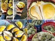 Thị trường - Tiêu dùng - Hoang mang nguồn gốc sầu riêng mini