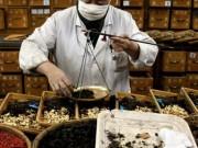 Liên tiếp bệnh nhân suy thận do thuốc nam: Cách nhận biết dược liệu rởm