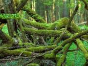 Du lịch - Khung cảnh ma mị trong khu rừng nguyên sinh cuối cùng ở châu Âu