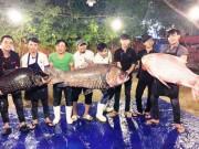"""Tin tức trong ngày - Bộ 3 cá hô """"khủng"""" màu hồng, vàng, đen xuất hiện ở Sài Gòn"""
