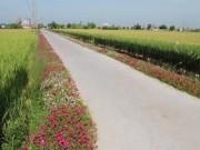 Ngỡ ngàng những con đường làng rực rỡ sắc hoa