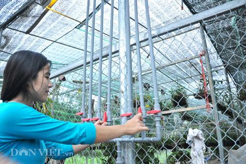 Nhà nông cho gà uống nước đá lạnh để chống nắng nóng 41 độ C - 7