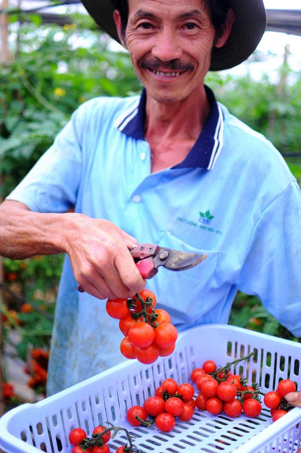 Những lão nông đổi đời nhờ mê rau công nghệ cao - 3