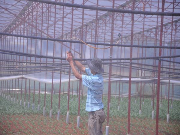 Những lão nông đổi đời nhờ mê rau công nghệ cao - 1