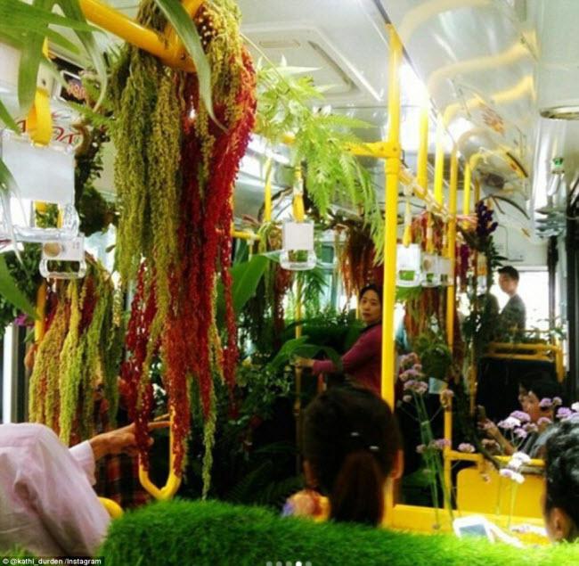 """""""Trốn nóng"""" trong xe bus """"rừng"""" lạ lùng ở Đài Loan - 5"""