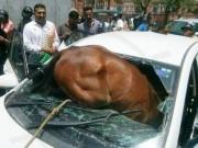 Ấn Độ: Nắng dữ dội, ngựa lao qua kính chui tọt vào xe hơi