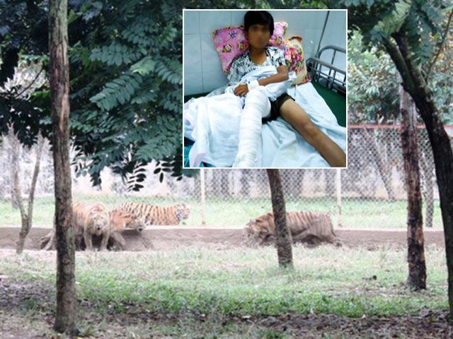 Kinh hãi: Khỉ đực vào nhà tấn công bé sơ sinh ngay giữa Thủ đô - 3