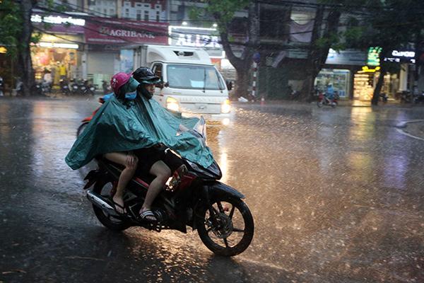 """Ảnh: Người Hà Nội sung sướng đi dưới """"mưa vàng"""" - 1"""