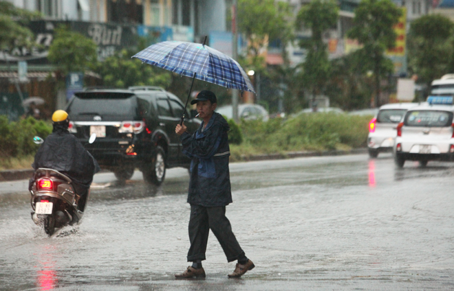 """Ảnh: Người Hà Nội sung sướng đi dưới """"mưa vàng"""" - 5"""