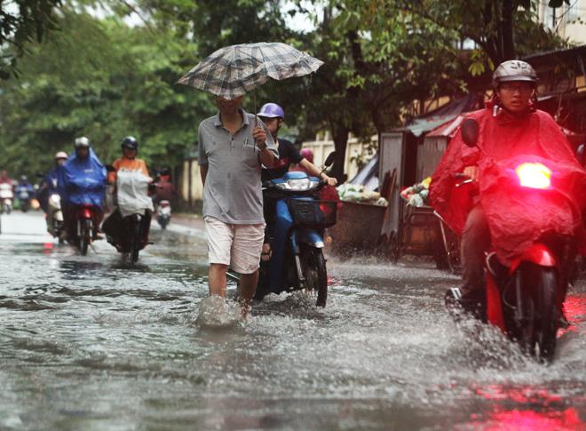 """Ảnh: Người Hà Nội sung sướng đi dưới """"mưa vàng"""" - 6"""