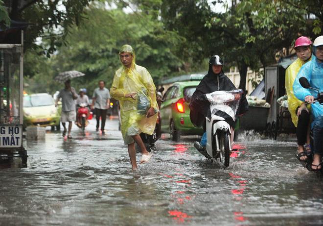 """Ảnh: Người Hà Nội sung sướng đi dưới """"mưa vàng"""" - 10"""
