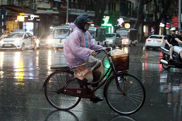"""Ảnh: Người Hà Nội sung sướng đi dưới """"mưa vàng"""" - 11"""