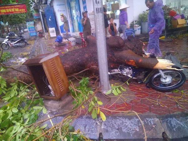 HN: Cành cây cổ thụ đè trúng 2 người sau trận cuồng phong - 1