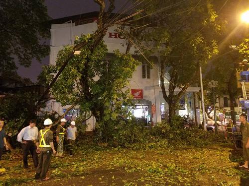 HN: Cành cây cổ thụ đè trúng 2 người sau trận cuồng phong - 2