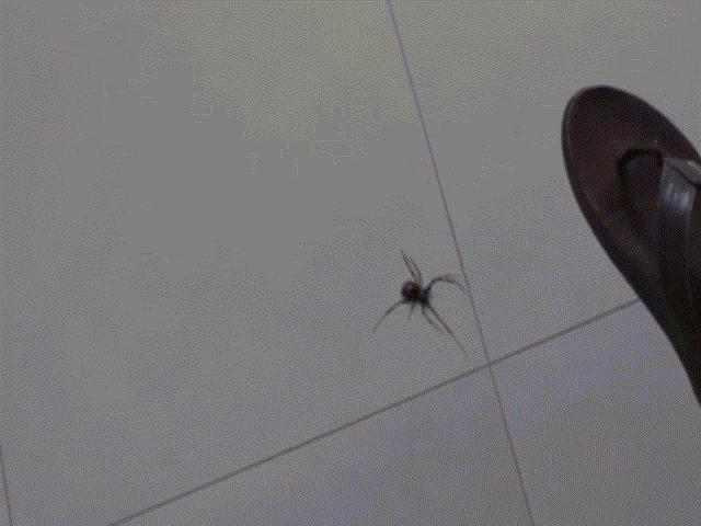Dùng dép đập nhện, há hốc mồm với cái kết