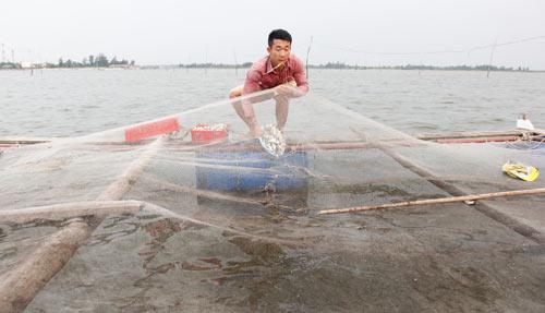 Bỏ lương 9 triệu về làng nuôi cá lồng muốn lãi 200 triệu/năm - 2