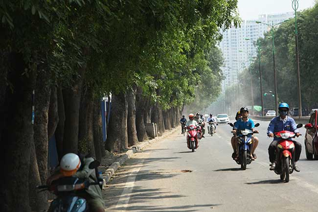 Theo kế hoạch, để thi công tuyến đường này, các cây xanh thuộc diện phải đánh chuyển, di dời, chặt hạ nằm trong phạm vi mở rộng đường, các đường dẫn lên xuống trên cao.