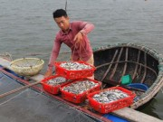 Thị trường - Tiêu dùng - Bỏ lương 9 triệu về làng nuôi cá lồng muốn lãi 200 triệu/năm
