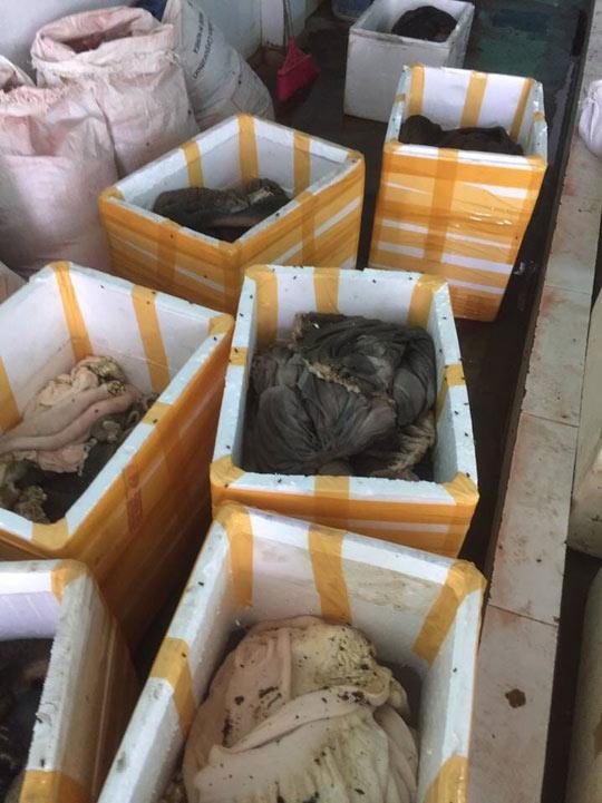 """Bắt quả tang cơ sở chế biến """"chui"""" gần 900 kg nội tạng động vật bẩn - 2"""