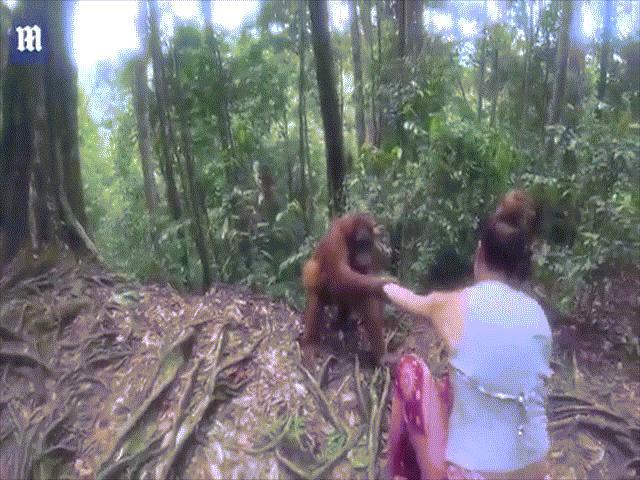 """Indonesia: Đười ươi giữ rịt tay cô gái, định """"bắt cóc"""""""