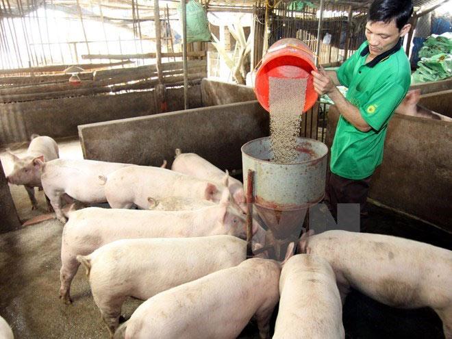 Lợn gà ế ẩm, sao vẫn phải chi 33.000 tỷ mua thức ăn chăn nuôi? - 1