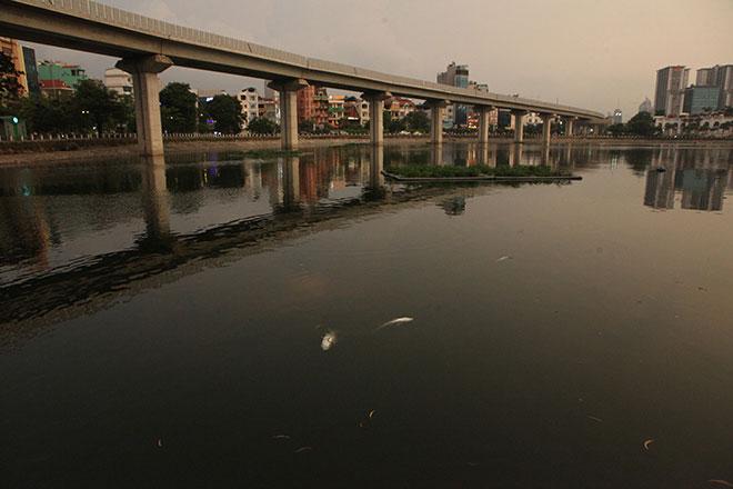 HN: Tròn 1 năm, cá lại chết trắng hồ Hoàng Cầu - 9